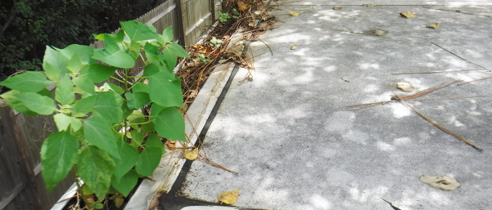 plant in gutter