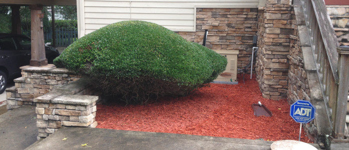 mulch and hedge